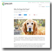 Care.com: Why Do Dogs Eat Poop?