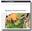 Cuteness: Why Would a Dog Eat Dirt and Grass?